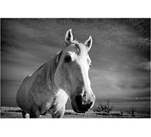 Our Mare Stormy Photographic Print