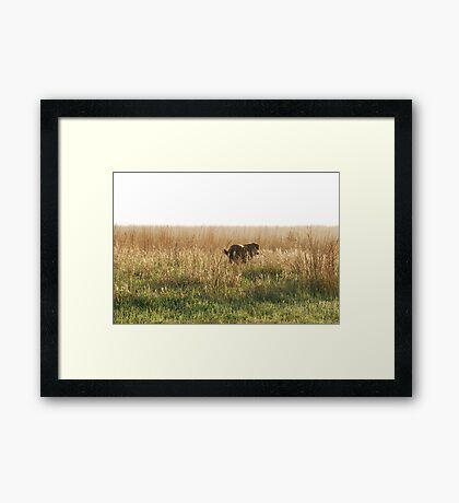 Lab in Field Framed Print