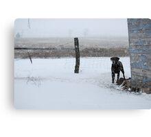 Snowy Labrador Retriever Canvas Print
