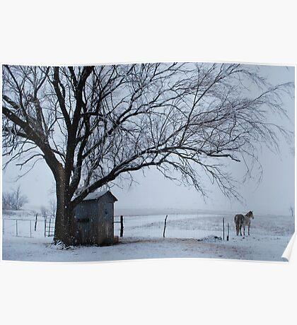 Horse in Snowy Prairie Landscape Poster