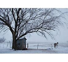 Horse in Snowy Prairie Landscape Photographic Print