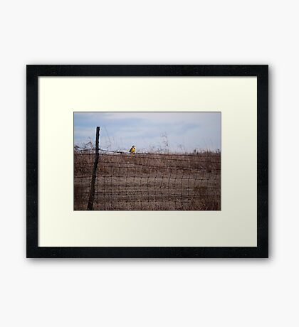 Meadowlark on Fence Framed Print