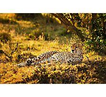 Cheetah at Sunrise Photographic Print