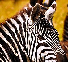 Zebra Portrait by Johan Skybäck