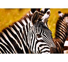 Zebra Portrait Photographic Print