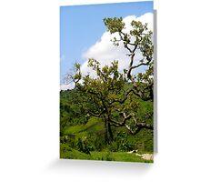African Tree in Kenya Greeting Card