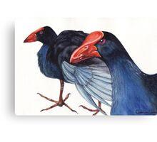 Wild Pukekos Canvas Print