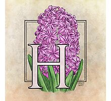 H is for Hyacinth - full image Photographic Print