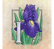 I is for Iris - full image Photographic Print