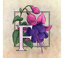 F is for Fuchsia - full image shirt Photographic Print