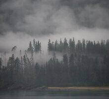 Alaskan Forest by Jazzroxal
