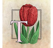 T is for Tulip - full image Photographic Print