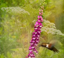 Foxglove Queen Ann's Lace and the Hummingbird by Diane Schuster