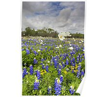 Texas Wildflower Images - White Poppies in a Field of Bluebonnets 2 Poster