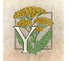 Y is for Yarrow Photographic Print