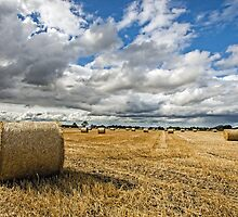 Rolling in the Hay by ajwimages