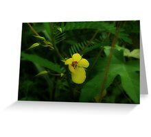 Partridge Pea Greeting Card