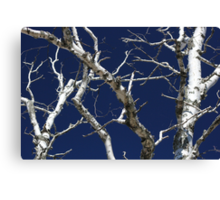 Dead Birch 1 Canvas Print