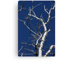 Dead Birch 2 Canvas Print