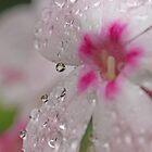 September Rain by Lynn Gedeon