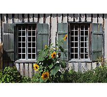 Green Windows Sunflowers Photographic Print