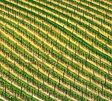 Vines in Australia by jwwallace