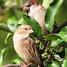 Mr. and Mrs. Sparrow by lorilee