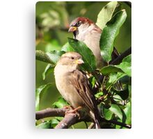 Mr. and Mrs. Sparrow Canvas Print