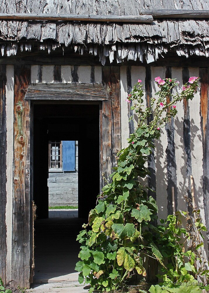 Thatched Roof Door Plant by marybedy