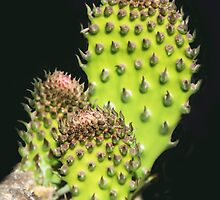 Prickly Trio by heatherfriedman