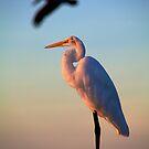 Great White Heron by njordphoto
