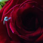 crab spider red rose. by AnjiMarth