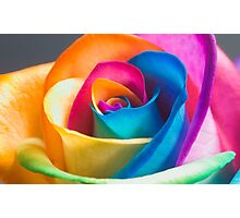 Rainbow Flower Photographic Print