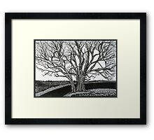 Solitary, Ink Tree Drawing Framed Print