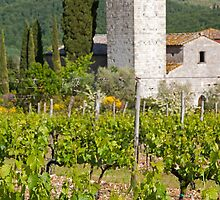 The Church Vineyard by Adrian Alford Photography