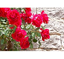 Red Climbers Photographic Print
