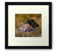 Gonna Fly Away Framed Print