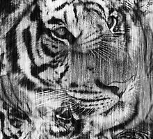 Black and White Layered Tiger Vintage by Silvia Neto