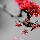 Blossom by Chelsea McCann