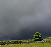 Lone Tree against a stormy sky by Nick Jenkins
