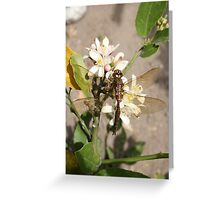 Dragonfly on Fruit Tree Greeting Card