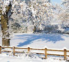 Snowy Scene by Heidi Stewart