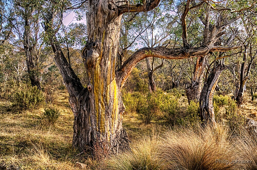 Guardians of The Bush - Thredbo NSW - The HDR Experience by Philip Johnson