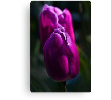 WOW factor Canvas Print
