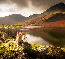 Small Dog, Big World by Steve Langton