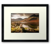 Small Dog, Big World Framed Print