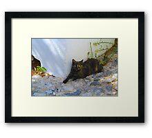 Greek Cat Framed Print