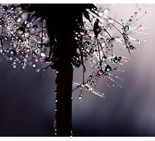 droplets of rainbow sparkles Photographic Print