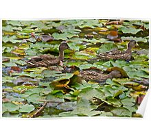 Ducks at the Lodge Poster
