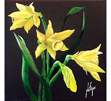 Daffodils, Nature's Trumpets Photographic Print